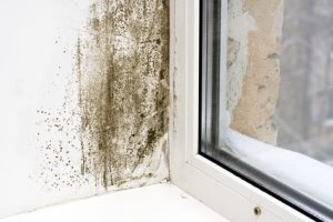 Mold Removal Gilbert