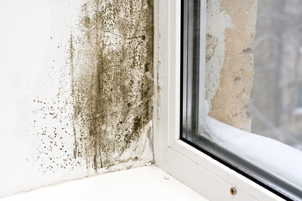 Mold Removal Gilbert, Mold Damage Gilbert
