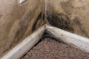 mold removal gilbert, mold cleanup gilbert