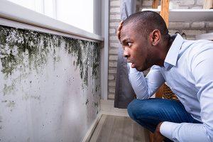 mold removal gilbert, mold remediation gilbert, expert mold removal gilbert